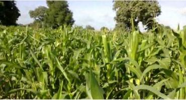 Elaboration des politiques agricoles en Afrique de l'Ouest: Les paysans ouest-africains donnent de la voix
