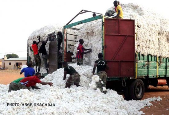 Campagne cotonnière 2018-2019 : L'Aic lance la commercialisation du coton graine