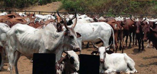 Affrontements meurtriers entre éleveurs et agriculteurs : Les transhumants sèment la terreur à Agbangnizoun et Adjohoun
