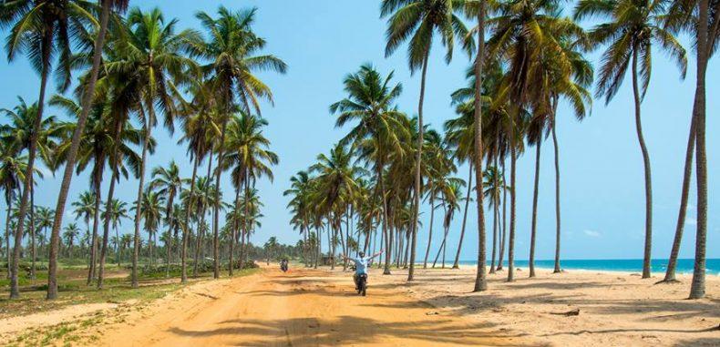 Environnement Le gouvernement interdit l'abattage des cocotiers sans autorisation