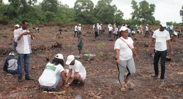Reboisement de la forêt classée de Sèmè-Podji: La Société générale Bénin met en terre 6100 plants